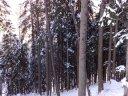 Wald - Fichte, Tanne, Lärche und Kiefer - was ist was?