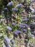 Scheckenfalter (vermutlich Melitaea cinxia)