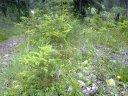 21.06.2010: Knabenkräuter im Wald