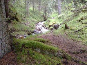 Mystischer Platz: Wald und Wildbach