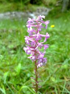 Orchidee gefunden