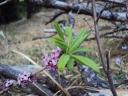 Der Frühling erblüht in allen Formen und Farben...